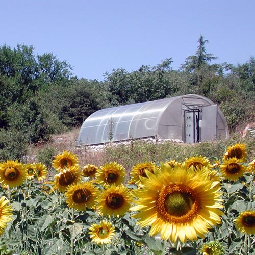 girasoli_e_serra_solare