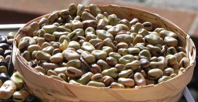 La Fava Cottora Presidio Slow Food