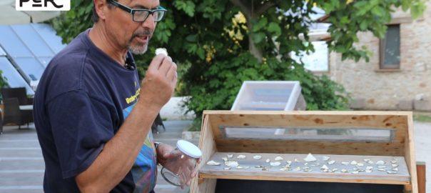 Essicazione solare dei cibi: garantisce la conservazione e preserva i nutrienti