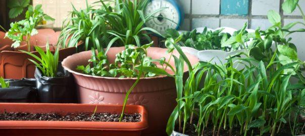 6 italiani su 10 hanno l'orto in casa, in balcone o in giardino