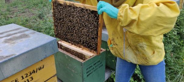 """""""Adottate"""" due colonie di api: nuovi arrivi all'agriturismo Il PeR!"""